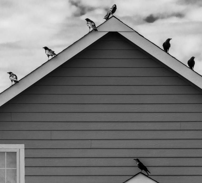 Birds lined up on house roof line