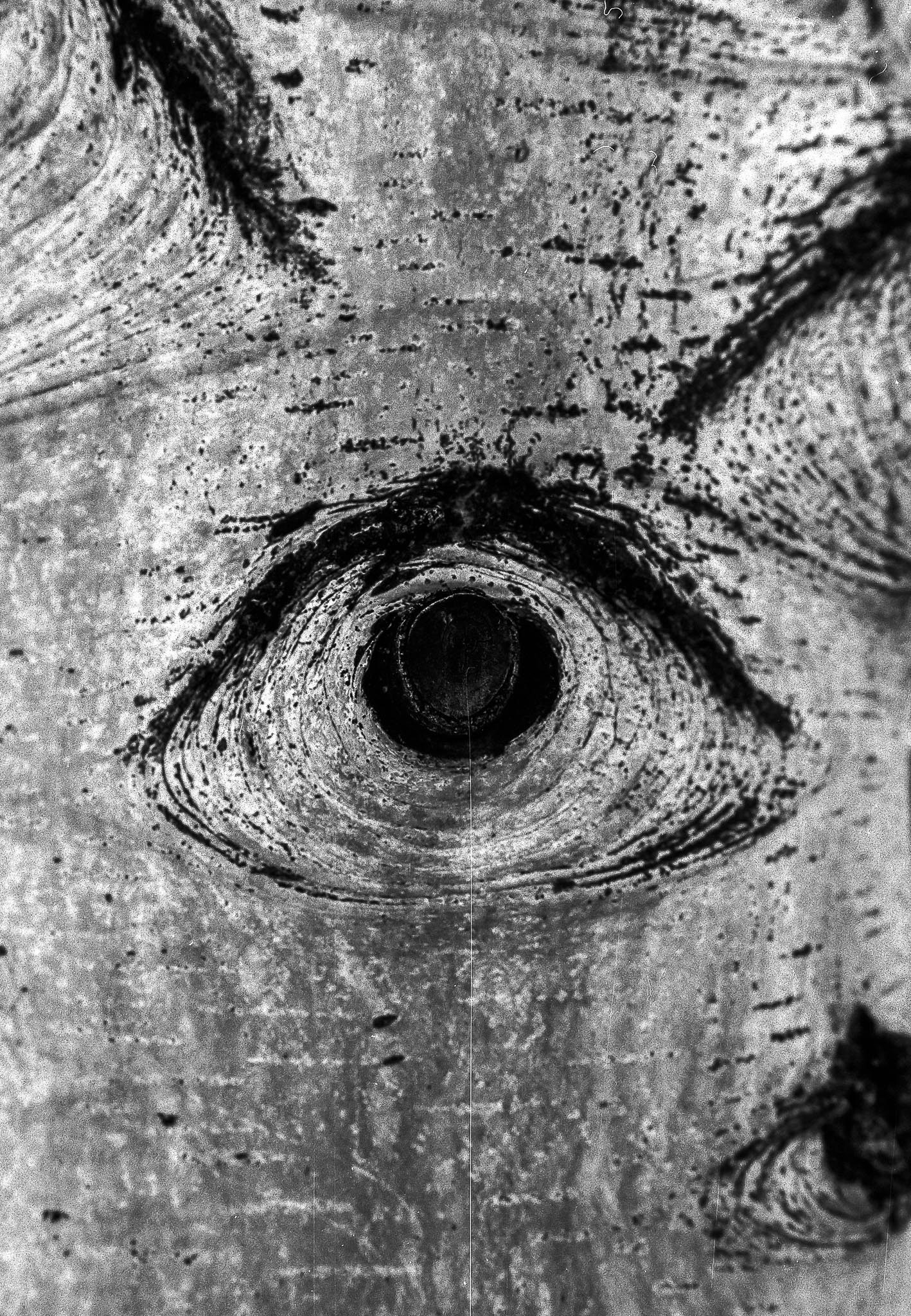 Seeing Eye Tree